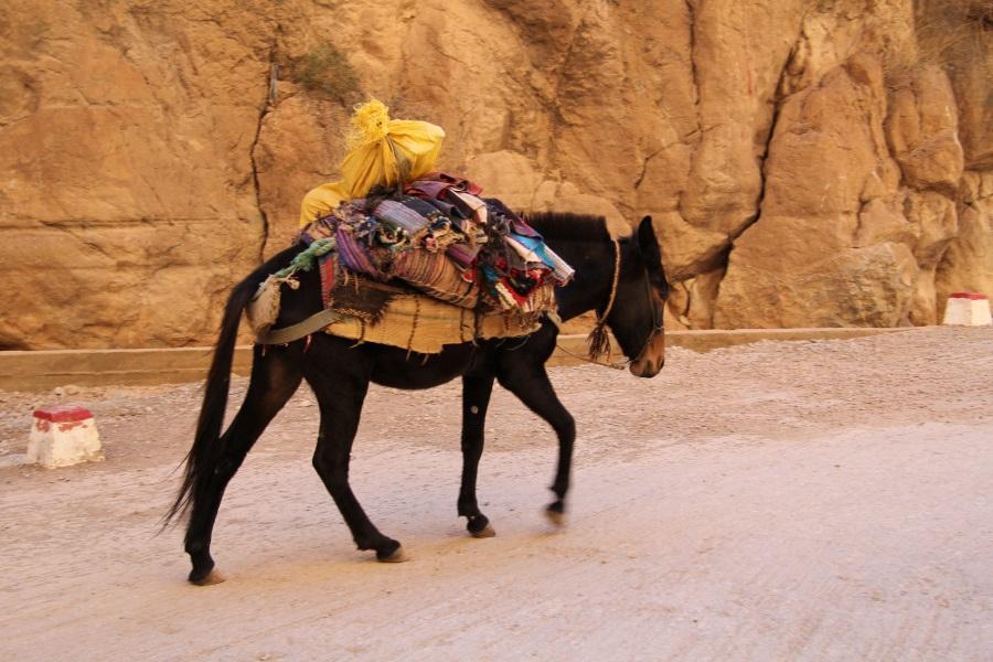 Typisches Transportmittel im Atlas