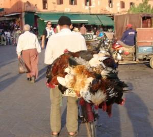 tag2 marrakesch djamaa al fna hühnerverkäufer