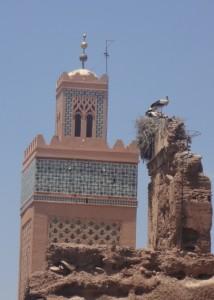 tag2 marrakesch hat viele störche