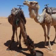 Faszination Marokko: Eine Woche Marrakesch & Wüste (5)