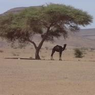 Faszination Marokko: Eine Woche Marrakesch & Wüste (7)