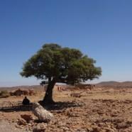 Reisebericht Marokkos Süden