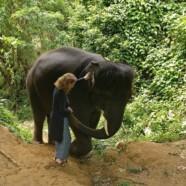 Eine zeitaktuelle Geschichte: Die Weisen und der Elefant